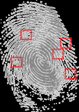 fingerprint-identification